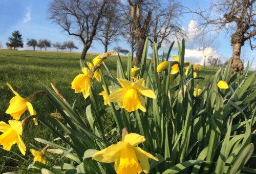 Wir wünschen frohe und gesunde Ostern